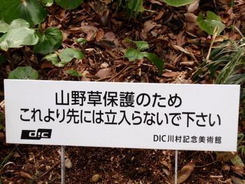 DIC川村記念美術館1306.jpg