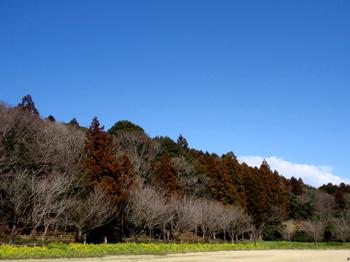DIC川村記念美術館1433.jpg