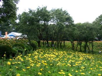 ところざわのゆり園2105.jpg