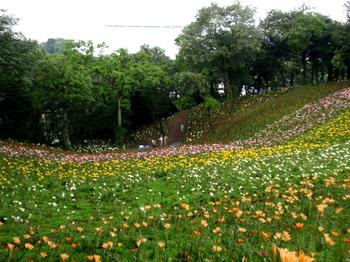 ところざわのゆり園2111.jpg