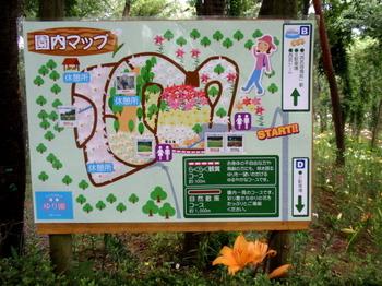 ところざわのゆり園2206.jpg