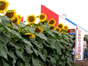 ひまわりフェスティバル0771.jpg