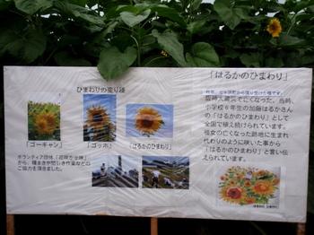 ひまわりフェスティバル0835.jpg