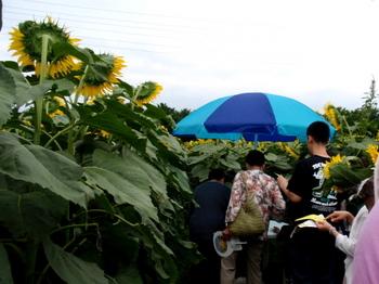 ひまわりフェスティバル0895.jpg