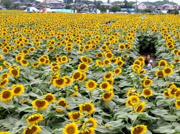 ひまわりフェスティバル0938.jpg