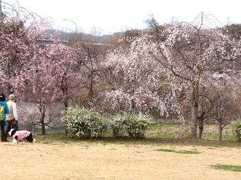 みかも山公園1079.jpg