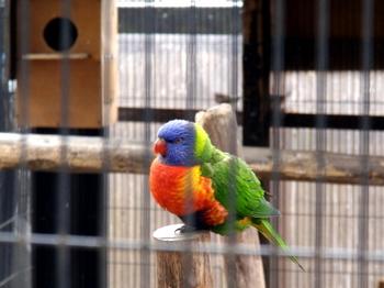 キャンベルタウン野鳥の森1660.jpg