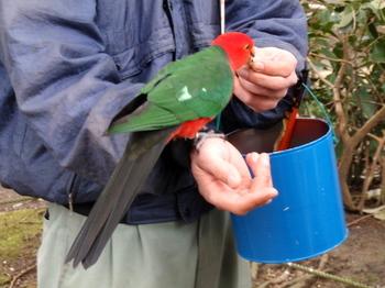 キャンベルタウン野鳥の森1683.jpg