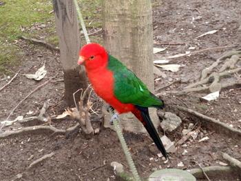 キャンベルタウン野鳥の森1687.jpg