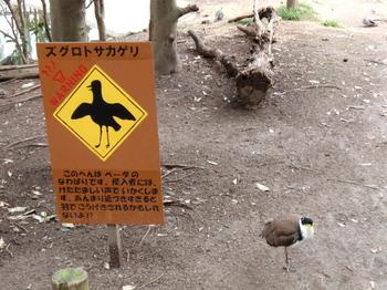 キャンベルタウン野鳥の森1693.jpg