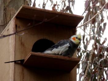 キャンベルタウン野鳥の森1697.jpg