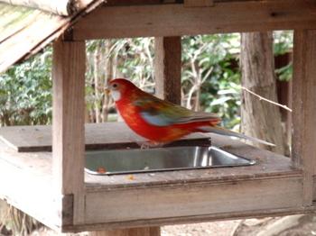 キャンベルタウン野鳥の森1730.jpg