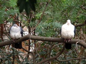 キャンベルタウン野鳥の森1745.jpg