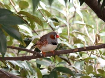 キャンベルタウン野鳥の森1753.jpg