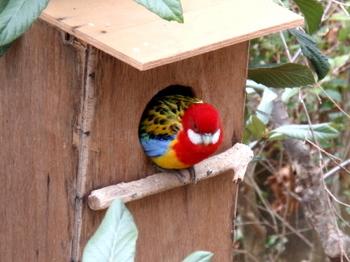 キャンベルタウン野鳥の森1763.jpg