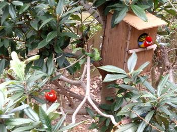 キャンベルタウン野鳥の森1764.jpg