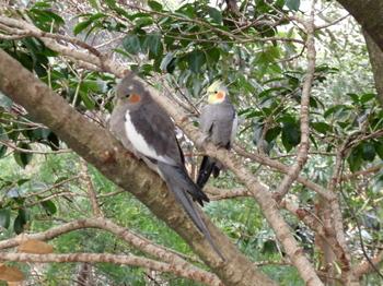 キャンベルタウン野鳥の森1775.jpg