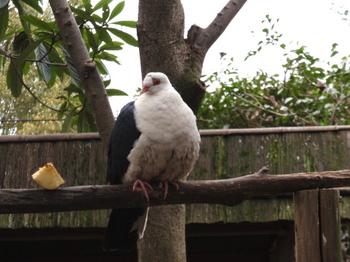 キャンベルタウン野鳥の森1791.jpg