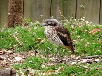 キャンベルタウン野鳥の森1809.jpg