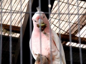 キャンベルタウン野鳥の森1854.jpg