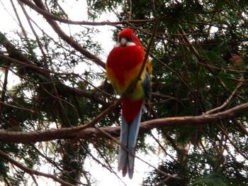 キャンベルタウン野鳥の森1881.jpg