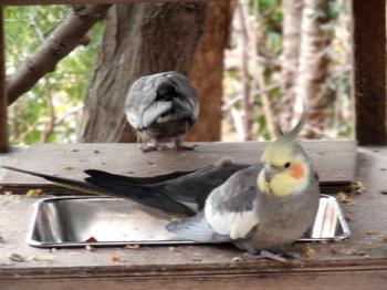 キャンベルタウン野鳥の森2009.jpg