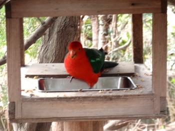 キャンベルタウン野鳥の森2041.jpg