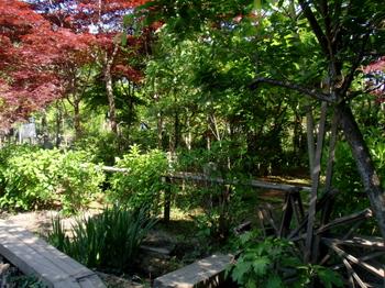 万葉植物苑0409.jpg