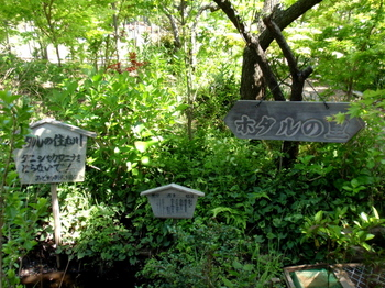 万葉植物苑0413.jpg