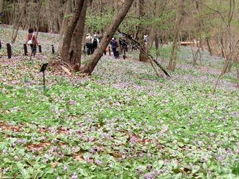 万葉自然公園 かたくりの里0921.jpg