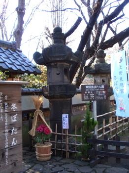 上野・東照宮ぼたん苑1174.jpg