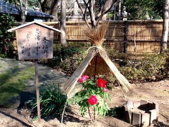 上野・東照宮ぼたん苑1206.jpg