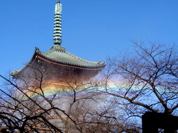 上野・東照宮ぼたん苑1377.jpg