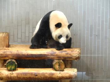 上野動物園1606.jpg