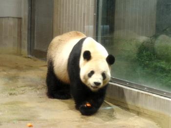 上野動物園1637.jpg