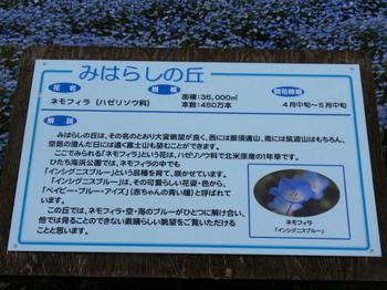 国営ひたち海浜公園0847.jpg