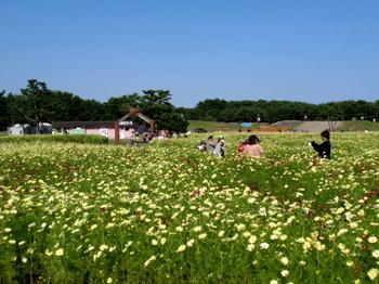 国営ひたち海浜公園0982.jpg
