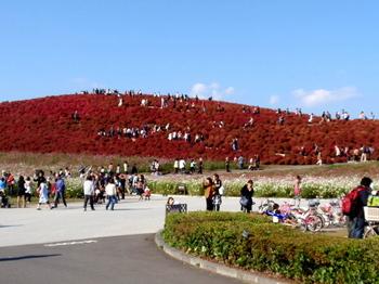 国営ひたち海浜公園1047.jpg