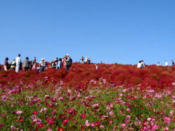 国営ひたち海浜公園1064.jpg