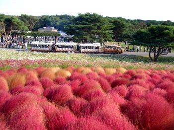 国営ひたち海浜公園1164.jpg