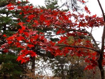 国営武蔵丘陵森林公園0017.jpg