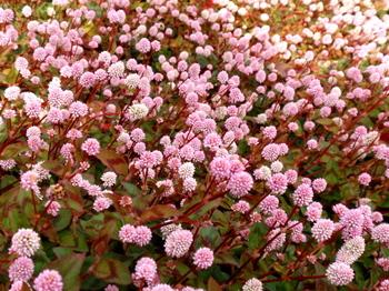 国営武蔵丘陵森林公園0141.jpg
