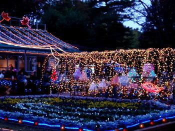 国営武蔵丘陵森林公園0326.jpg