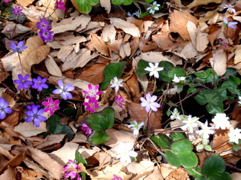 国営武蔵丘陵森林公園1173.jpg