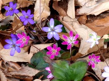 国営武蔵丘陵森林公園1221.jpg