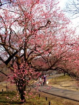 国営武蔵丘陵森林公園1319.jpg