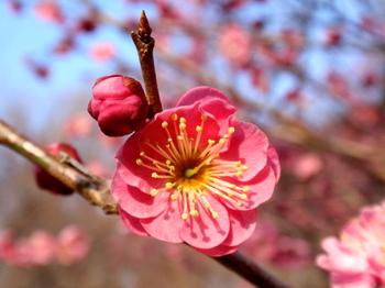 国営武蔵丘陵森林公園1322.jpg