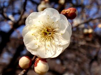 国営武蔵丘陵森林公園1356.jpg