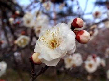 国営武蔵丘陵森林公園1365.jpg
