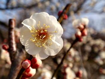 国営武蔵丘陵森林公園1383.jpg